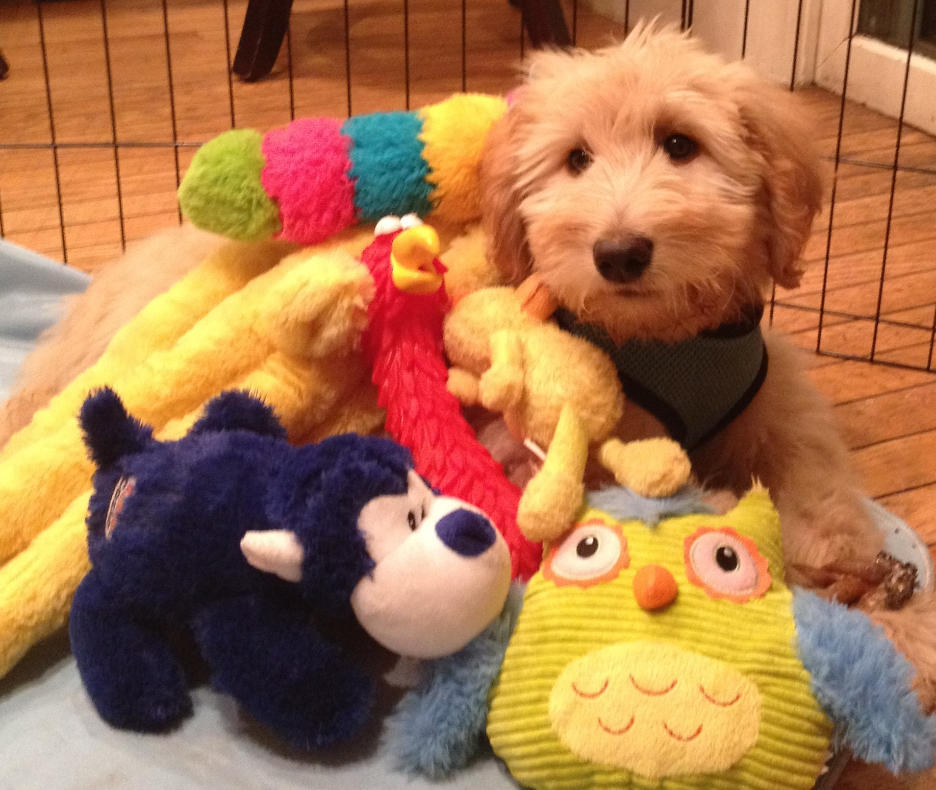 A puppy dog covered in stuffed animal-the puppy dog close in the sales process
